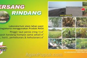 From Gersang to Rindang